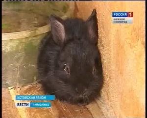 В семье кроликов-великанов родился карликовый малыш