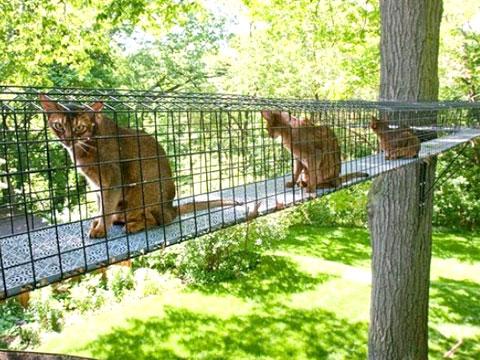 Кошкам устроили небо в клеточку