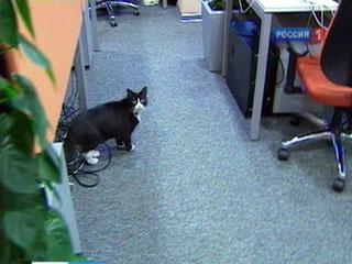 Кошка Сара ответственна за релаксацию в офисе