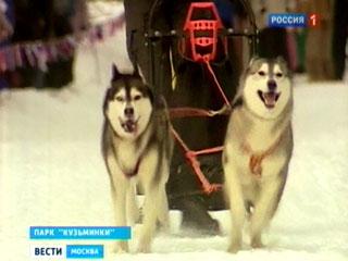 В Кузьминском лесопарке проходят соревнования, участниками которых стали сотни юных спортсменов и их подопечные - собаки породы хаски