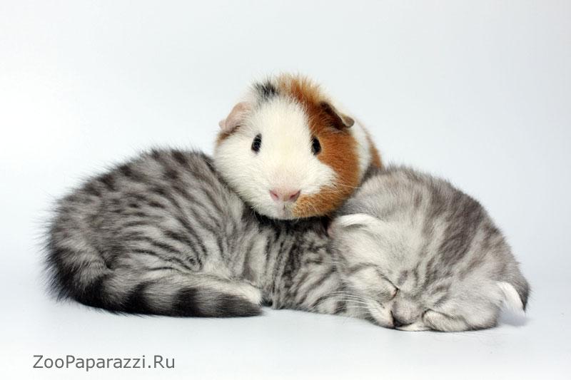 Морская синка и котенок. Автор: Галина Жижикина, Москва